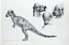 """jptopps:  dinosaursandotherawesomestuff:   Pachycephalosaurus, the Lost World: Jurassic Park concept art by Mark McCreery (1996/97).  I really, really love """"Crash"""" McCreery's work.  His work on the Jurassic Park franchise is so iconic. This piece is particularly stunning.  I wish we could have seen more of the pachy in the JP films."""