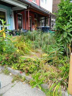 Toronto garden clean up Small Front Gardens, Back Gardens, Organic Farming, Organic Gardening, Toronto Gardens, Toronto Neighbourhoods, Bonsai Styles, Garden Maintenance, Gnome Garden