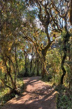 parque nacional de Aparados da Serra é uma unidade de conservação brasileira de proteção integral da natureza localizada na Serra Geral, encampando os desfiladeiros na fronteira natural entre os estados do Rio Grande do Sul e de Santa Catarina.