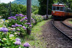 VOMZ MIR-1B (МИР-1B) 37mm/F2.8 (M42) Industar 61 L/Z-MC F2.8/50mm (M42) Hakone Tozan Railway, Hakone-Town, Ashigarashimo-District, Kanagawa-Prefecture, Japan. June 2016, Sony α7ⅱ VOMZ MIR-1B (МИР-1B) 37mm/F2.8 (M42) Industar 61 L/Z-MC F2.8/50...