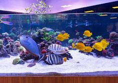 Reef Aquarium, Saltwater Aquarium, Aquarium Ideas, World Wide Corals, Aqua Culture, Fresh Water Tank, Live Coral, Fish Tank, Ocean