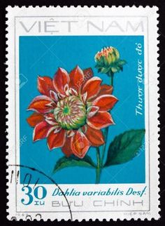 17523412-VIETNAM-CIRCA-1984-a-stamp-printed-in-Vietnam-shows-Georgina-Dahlia-Variabilis-Desf-Flower-circa-198-Stock-Photo.jpg (951×1300)