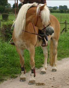HORSES Photo Library - Page 3 - WetCanvas