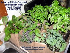 Grow an Edible Orchard and Garden with Food Stamps (SNAP EBT)! #EBT, #Edible, #Food, #FoodStamps, #Fruit, #Garden, #Gardening, #Herbs, #Orchard, #SNAP, #Tree, #Vegetables #Gardening