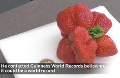 MUTANT FREAK: The World's Largest Strawberry