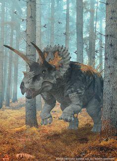 Triceratops (dinosaurio ceratópsido del Cretácico de Norteamérica,  68 Ma) (Herschel-Hoffmeyer)