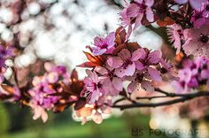 Baumblüte   Flickr - Photo Sharing! Photography Photos, Explore, Plants, Tree Structure, Flora, Plant, Exploring