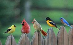 Birds on a fence, I have seen all of these in my yard