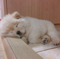 Such a Precious Chow Chow! Sleeping Puppies, Fluffy Puppies, Puppies And Kitties, Cute Puppies, Cute Dogs, Chow Puppies For Sale, Tiny Puppies, Cute Little Animals, Cute Funny Animals