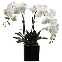 """White Phalaenopsis 22"""" High Faux Orchids in Square Pot"""