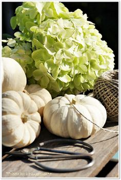 Small white pumpkins and green hydrangea