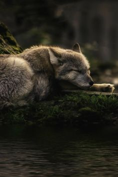 loveandaquestion - foresity:  sleeping where the waters flow...