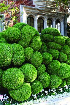 Topiary Garden, Garden Art, Garden Plants, Shade Garden, Boxwood Topiary, Herb Garden, Vegetable Garden, Formal Gardens, Outdoor Gardens