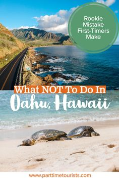 Avoid this rookie mistake when visiting oahu, hawaii! Things to see, what to do, and many other tips and tricks on how to have a perfect vacation in hawaii! Hawaii Vacation, Hawaii Travel, Beach Trip, Travel Usa, Mexico Travel, Cancun Hotels, Beach Hotels, Beach Resorts, Kailua Beach