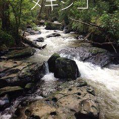 【mekishiko_】さんのInstagramをピンしています。 《森の中を歩きます。 #水路 #森 #メキシコ #travels #world #mexico #散歩 #木 #木の葉 #緑 #岩 #恋 #寒い #楽しい》
