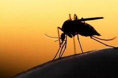 Jakie rośliny odstraszają komary? Koniecznie zobacz!