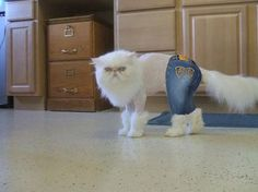 Apple bottom jeans boots with the fur. The whole club looking