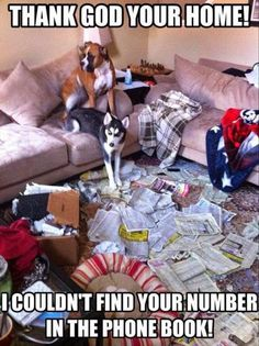 """""""Thank God you're Home! We couldn't find your number in the phone book!"""" ~ Dog Shaming shame - Boxer & Husky - we've been trying to call you for hours - Honest :)lol! Funny Animal Pictures, Dog Pictures, Funny Photos, Funny Animals, Cute Animals, Animal Pics, I Love Dogs, Cute Dogs, Game Mode"""