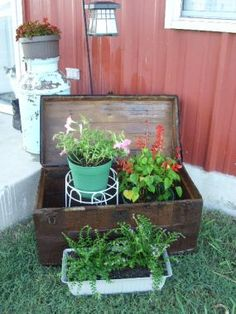 Flowers planted in an old treasure chest or trunk