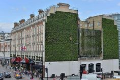 Time Out. Aug. 2014. A great shoot: London's largest living wall breathes fresh life into Victoria