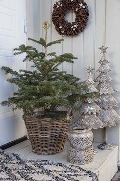 Juletre i potte blir stadig mer populært både ute og inne.