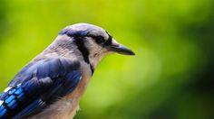 bird nice