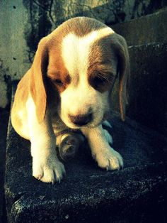 why you are so sad? I just want to hug this lil guy.