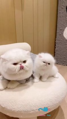 Funny cat.Pet Cat Bed Soft Plush Nest Funny Cute Cats, Cute Funny Baby Videos, Cute Funny Babies, Cute Cat Gif, Funny Animal Videos, Cute Funny Animals, Funny Animal Pictures, Cute Little Kittens, Cute Baby Cats