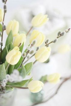 White Tulips and Pussy willow