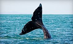 Groupon - $ 45 for a Blue-Whale-Watching Cruise for Two from Harbor Breeze Cruises in Long Beach (Up to $ 100 Value). Groupon deal price: $45.00