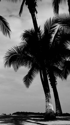 palm trees ocean breeze #aSurfersHoliday