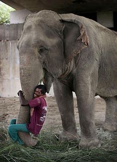 Indian mahout Sambu hugs the trunk of his 40-year-old female Assamese elephant, Kuchma, below an underpass in New Delhi, May 31, 2012. India has an estimated 28,000 wild elephants living in forest reserves and national parks. Another 3,500 elephants live in captivity, many of them in temples or working in logging camps.