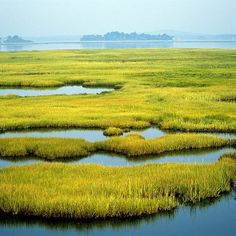Located along the northeast coast of Massachusetts Parker River National Wildlife It's a really cool salt marsh that provides feeding resting and nesting habitat for birds including the federally threatened piping plover. @ParkerRiverNWR