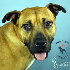 Sweet Sara (ID 575736) has been waiting since May to find a fabulous home and doesnt understand why she is being overlooked.  She came to the Humane Society of Broward County from another shelter where not a lot of people go to adopt and is hoping her luck will change here.  Sara is an energetic playful girl who calms down after a few minutes of play. She especially loves to chase after balls. Sara is a smart gal and would love to go to doggie classes with you.  At just over a year old and…