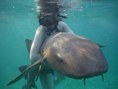 Belize  Swimming with sharks you only live once right?
