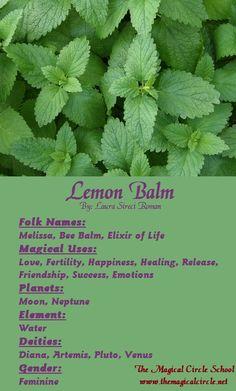 Lemon Balm Magical Properties - The Magical Circle School - www.themagicalcircle.net