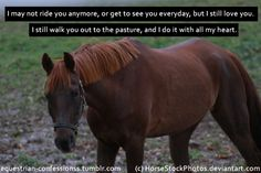 Love what someone did with one of my photos My Horse, Horses, I Still Love You, Horse Quotes, Dressage, Confessions, Equestrian, My Photos, Retirement