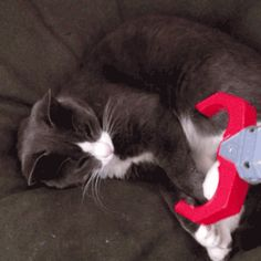 These 53 GIFs Show Why Cats Are The Best Pets Ever | Blaze Press
