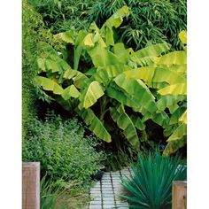 Plante exotique la maison tout savoir sur les for Bananier artificiel pas cher