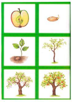 """Обучение и развитие детей - """"Непоседы"""" Montessori, Fruits For Kids, Autumn Art, Kindergarten, Fall, Crafts, Plants, Preschool, Learning"""
