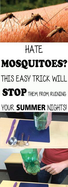 You trouble with sleeping because mosquitoes are biting you? You are looking for a way to get rid of them forever? Don't worry because there is a solution for those boring insects.You will no longer have trouble with sleeping. Summer Nights, Summer Fun, Bug Off, Pest Control, Mosquito Control, Bug Control, Insect Repellent, Garden Pests, Things To Know