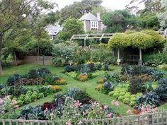 Gardening parterres on pinterest boxwood garden for Parterre vegetable garden design