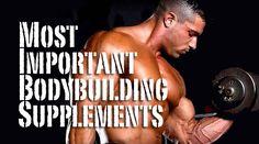 muscle building supplements for men