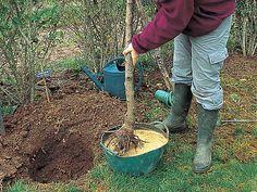 Pourquoi et comment les planter les arbustes à racine nue en hiver ? Les explications des spécialistes Rustica.