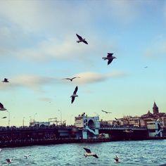 Uçan kuşlar, martılar .