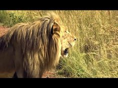 Off to Africa again! VIDEO Thanks to Eric with Mt Carmel Films #NikelaAfrica