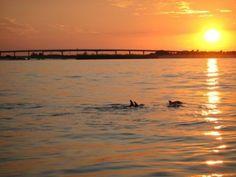 """""""O GRITO DO BICHO"""": Golfinhos também possuem redes sociais!"""