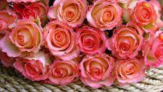 $50 for 24 roses! Send Roses Online! - Example of a summary description in English. Lorem ipsum dolor sit amet, consectetuer adipiscing elit. Pellentesque nisi nisi, consectetuer eget, mollis at, consectetuer id, turpis.