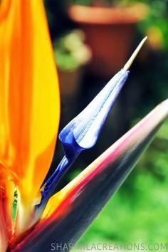 Sharmila Créations: Oiseau de paradis