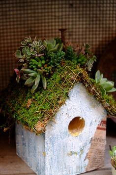 Beautiful and rustic ideas for gardening with succulents